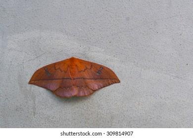 moth on a concrete wall