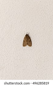 Moth on textured wall
