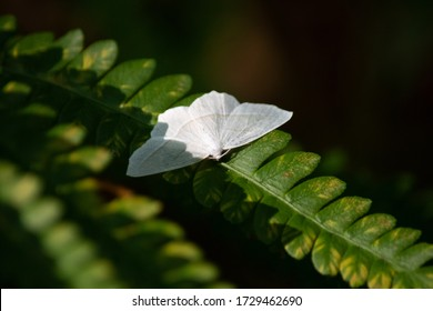 Moth Rests on a Plant