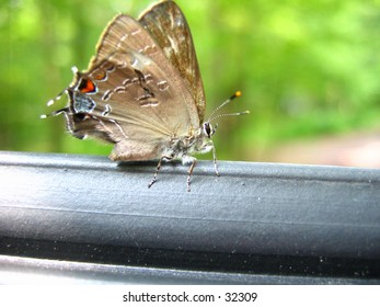 Moth sitting on a rail