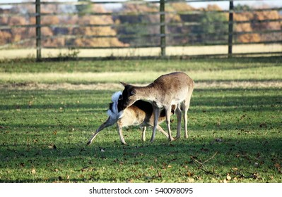 mother amd child deer in a curious position