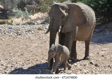 A mother and baby African elephant in Etosha national park in Namibia Africa