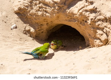 A mother and baby bee-eaters feeding on the sand by a hole which also serves as the nest.