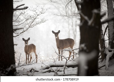 A mother and baby deer standing at the edge of the woods.
