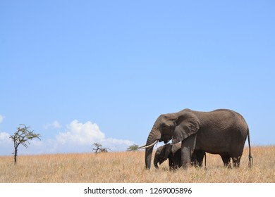 Mother and baby elephant on dry grassland landscape