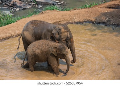 mother and baby elephant are playing water