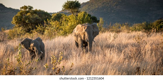 mother and baby elephant together during a safari in africa