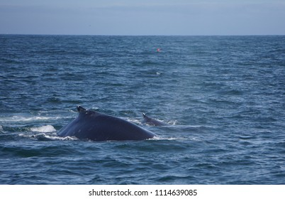mother and baby humpback whales