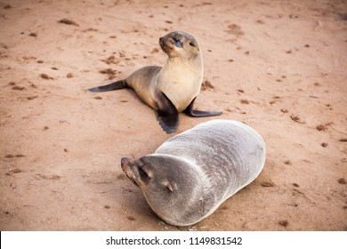 Mother and baby pup sea lions (Seals, Otariinae) at the beach near Cape Cross, Skeleton Coast, Namibia, Africa