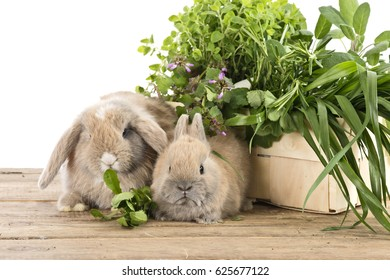 mother and baby rabbit with fresh herbs