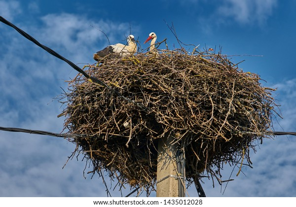 Mother and Baby Stork in Nest