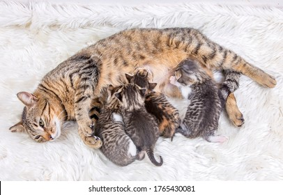 Mother cat and baby cats