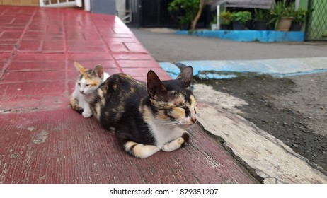 Mother of cat enjoy the sunrise at the street