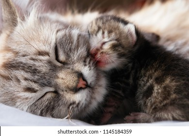 Mother Cat and her newborn kitten