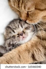 mother cat hugging little kitten