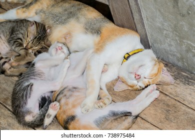 Mother cat and kitten hug and sleeping