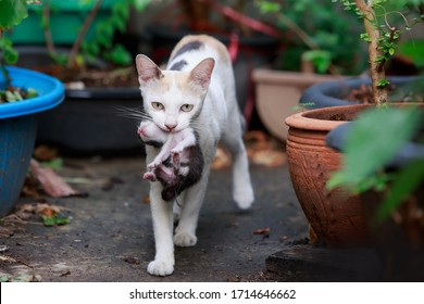Mother cat  with newborn kitten in her mouth