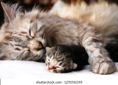 Mother cat and newborn kitten hugs