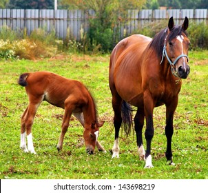Mother and child grazing and taking rest on the green meadow.