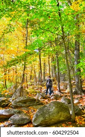 A mother and child are hiking on the Appalachian trail through the woods on a cool fall day. Boulders, rocks and golden fallen leaves litter the ground
