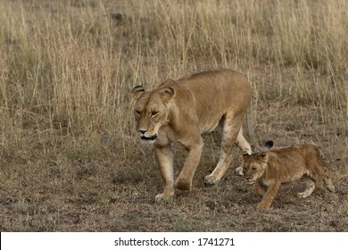 Mother and cub lion