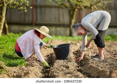 Mother and daughter farmers planting potatoes in their garden