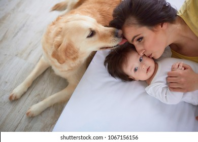 The mother with daughter lie on the bed and dog looking at them