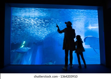 Mother and daughter looking at the aquarium