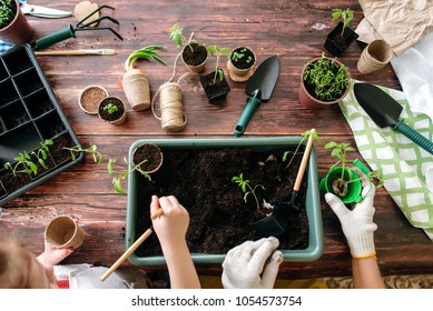 Mother and daughter planting seedlings at home holding garden tools. Hands of girls and little sprouts. Flat lay and top view.