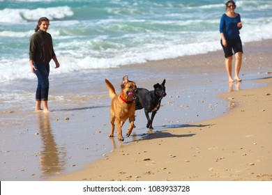 Mother and daughter playing with dogs at the beach