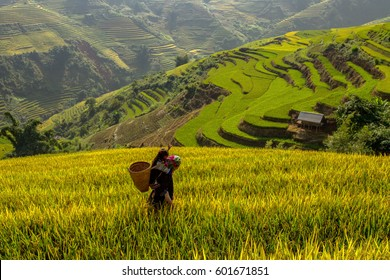 Mother and daughter are walking home on the Vietnamese Rice terraces.