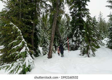 A mother and daughter walking through the mountains covered in freshly fallen snow surrounded by nature full of trees and a lake, on cypress mountain, british columbia, canada.