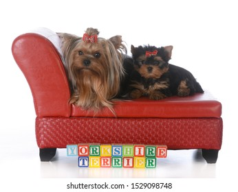 Admirable Dog On Leather Couch Photos 986 Dog On Leather Stock Image Forskolin Free Trial Chair Design Images Forskolin Free Trialorg