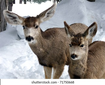 Mother deer and fawn on a wet and wintry day