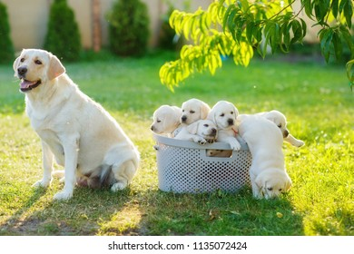 mother dog guards her pups who are trying to escape from the basket