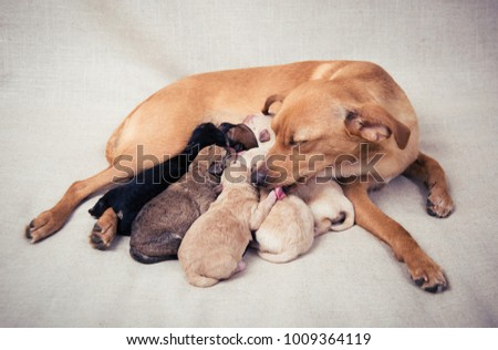 Mother Dog Nursing Cleaning Her Puppies Stock Photo Edit Now