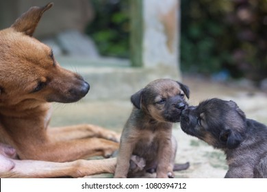 mother dog take care  puppies with love