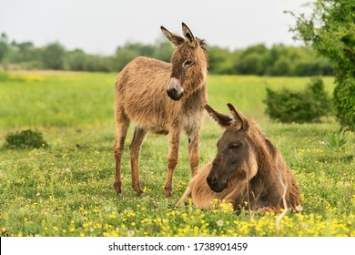 A mother donkey and her baby in farm. Two cute donkeys in the field