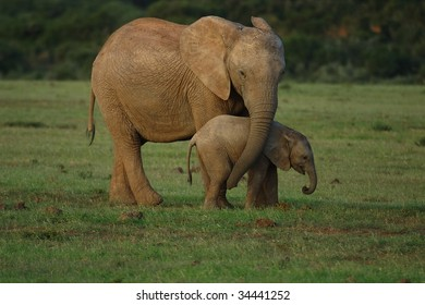 Mother elephant caressing baby with her trunk