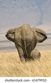 A mother elephant and her calf walking together in Kenya's Masai Mara