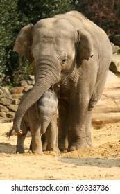 Mother elephant hugging her baby