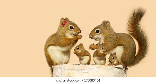 A mother, and father squirrel and their three babies eating sunflower seeds on a birch log in the spring with copy space. Part of a series.