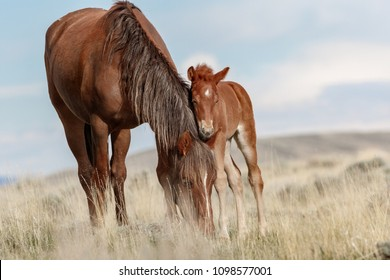Mother and foal Horses