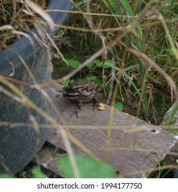 the mother frog's love for her child at field