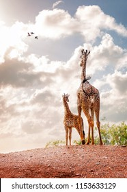 Mother giraffe and six week old baby calf standing together on a hilltop looking out into sunrise in partially cloudy sky. Vertical with room for text