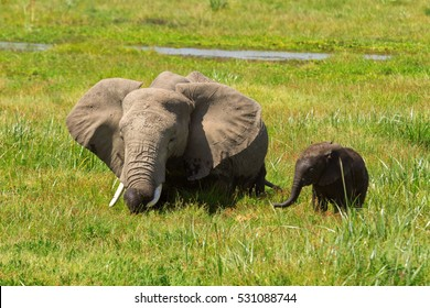 Mother and her baby elephants in a pond. Shot at Amboseli national park, Kenya