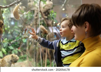 Mother with her son looking at wild animals in the museum