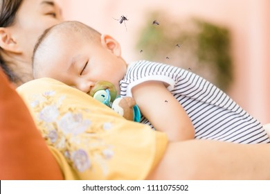 Mother holding baby boy child sleeping and Mosquito sucking blood on child skin.Allergies with mosquitoes bite and itching,protection baby from mosquito concept.
