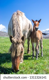 Mother horse and baby colt bond in Llivia, Girona, Spain