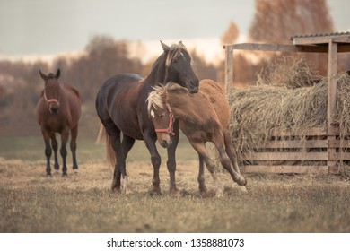 mother horse and her son foal playing and having fun on the green field in autumn landscape